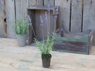 "Chic Antique ""Lavendel"""