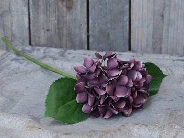 "Chic Antique ""Hortensia"" Plomme"